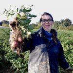 premières pommes de terre