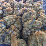 Les pommes de terre 2017