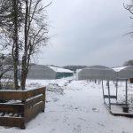 Il a neigé au Jardin!